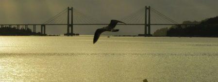 Lancha sobrevoada por gaivota en Rande. Carlos