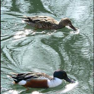 Avistamento de aves